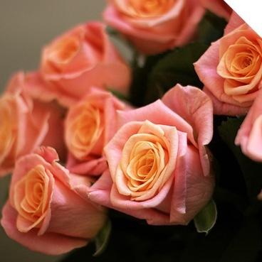 Синии розы купить в питере